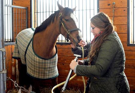 fl equine wellness