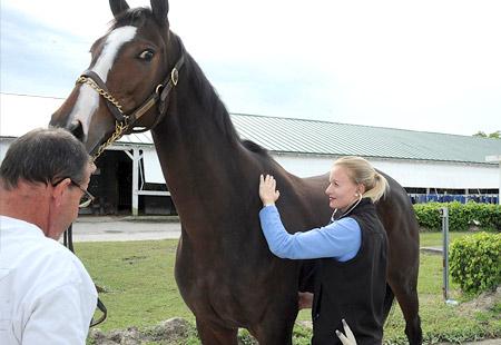 belmont park, ny equine veterinary